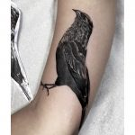 thiago oliveira cobertura coverup passaro bird preto cinza